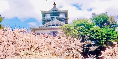 castello di Maruoka il mio viaggio in Giappone traveltherapists hanami