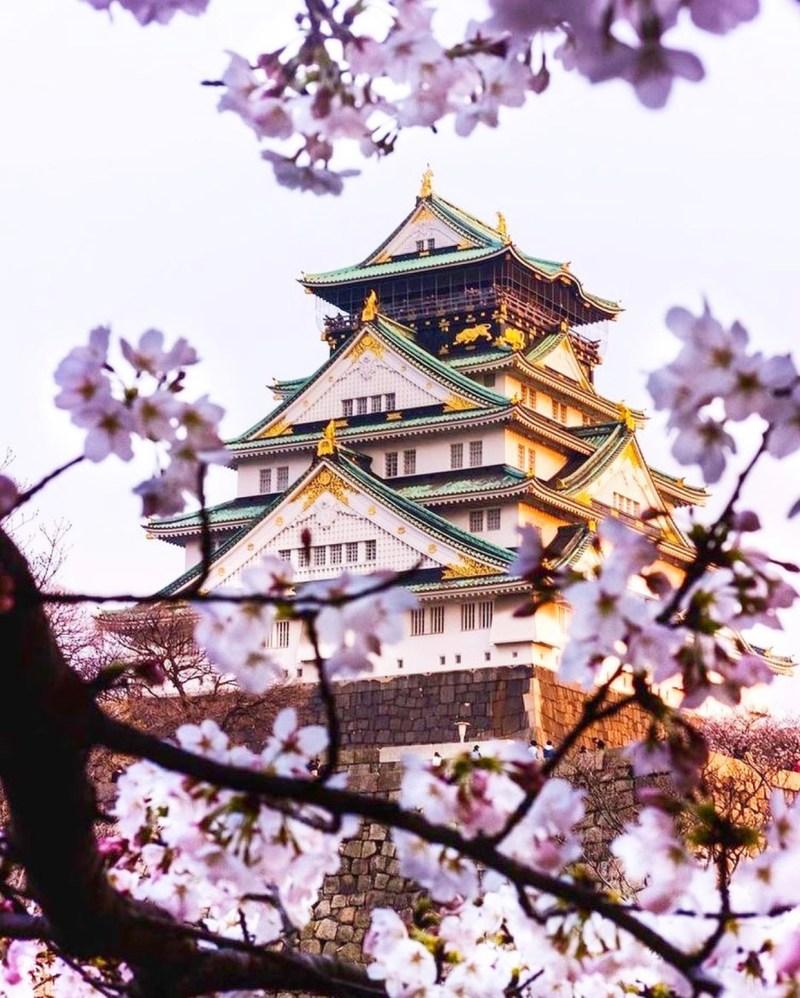 castello di osaka ume no hana il mio viaggio in giappone fiori rossi traveltherapists