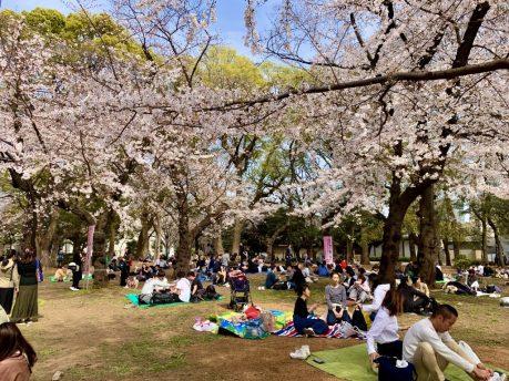 il mio viaggio in giappone traveltherapists tokyo hanami 2021 yoyogi