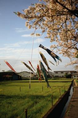 carpe koinobori il mio viaggio in giappone traveltherapists miglior blog di viaggio Cosa è la Golden Week in Giappone?