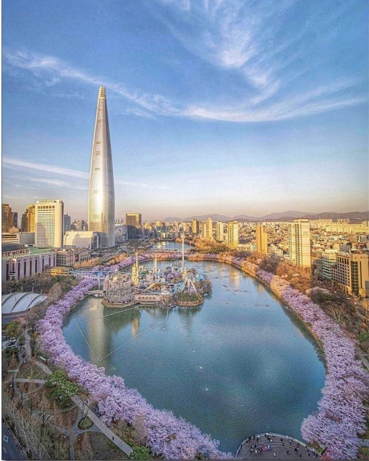 panorama di Seoul con ciliegi traveltherapists
