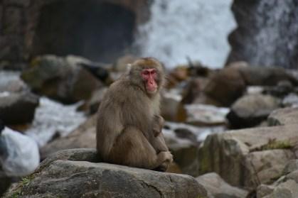 macachi nagano scimmia nagano il mio viaggio in giappone traveltherapists blog giappone miglior blog di viaggio