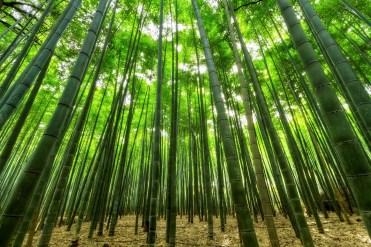 passeggiare foresta bambù il mio viaggio in giappone traveltherapists blog giappone Top esperienze da fare in Giappone miglior blog di viaggio