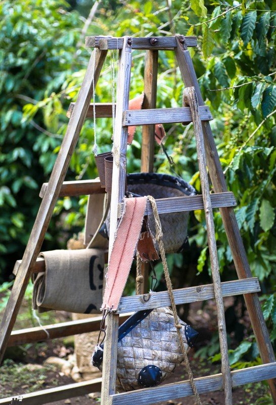 Kona Coffee Living History Farm (3 of 6)