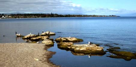 travel, destinations, photography, culture, facts, New Zealand, Kiwi, blue duck, Taupo Lake