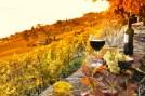 les vignes et du vin