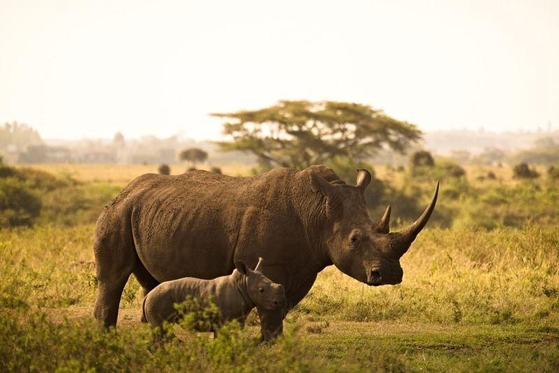 Top-Rated Tourist Attractions in Nairobi