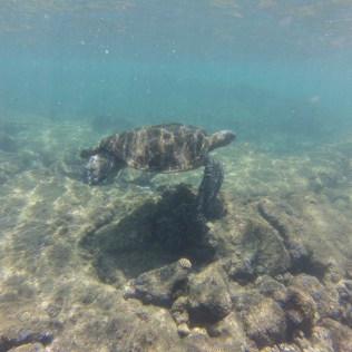 tortues Big island hawaii road trip usa travel blog voyage travel to the moon and back traveltothemoonandback