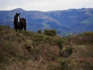 Pays basque pottoks ascain randonnée voyage express weekend traveltothemoonandback travel to the moon and back blog