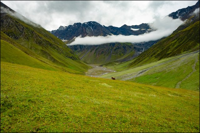 Meadows around Kalihani River, Bada Bhangal Trek, Himachal Pradesh, India