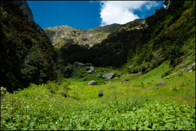 Meadows of Bedi Thatch, Great Himalayan National Park, Himachal Pradesh, India