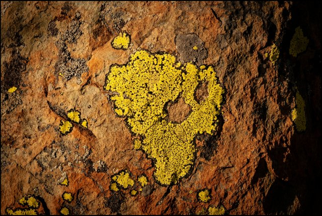 Lichens of high-altitude Himalaya