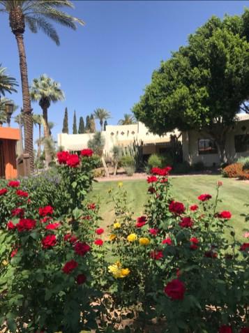 wigwam roses