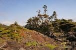 Wild Pacific Trail (6)