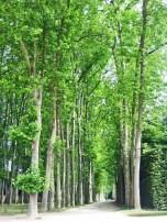 Versailles Gardens (16)