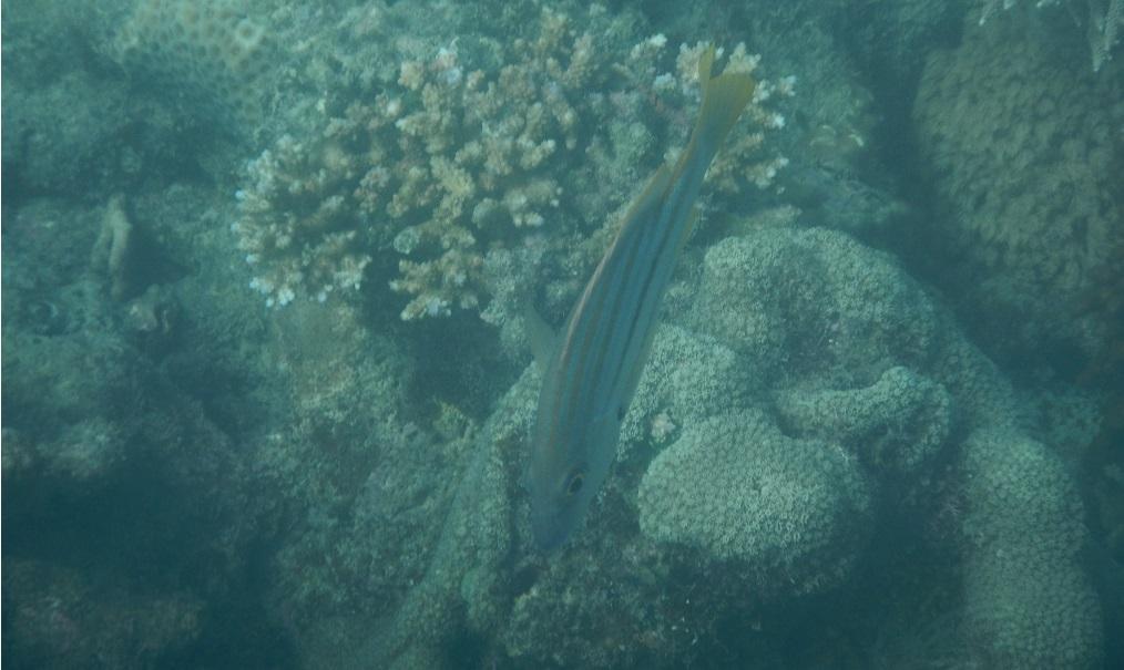 6 Snorkel b