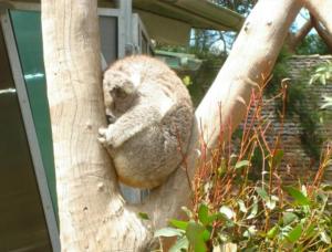 TravelGadgetReview_Koala