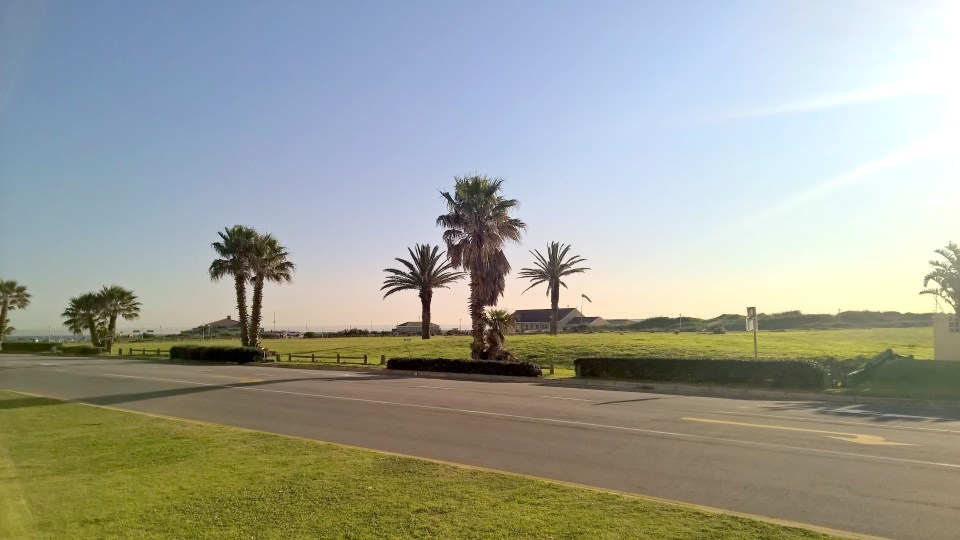 Feels like holidays: Palms in Summerstrand
