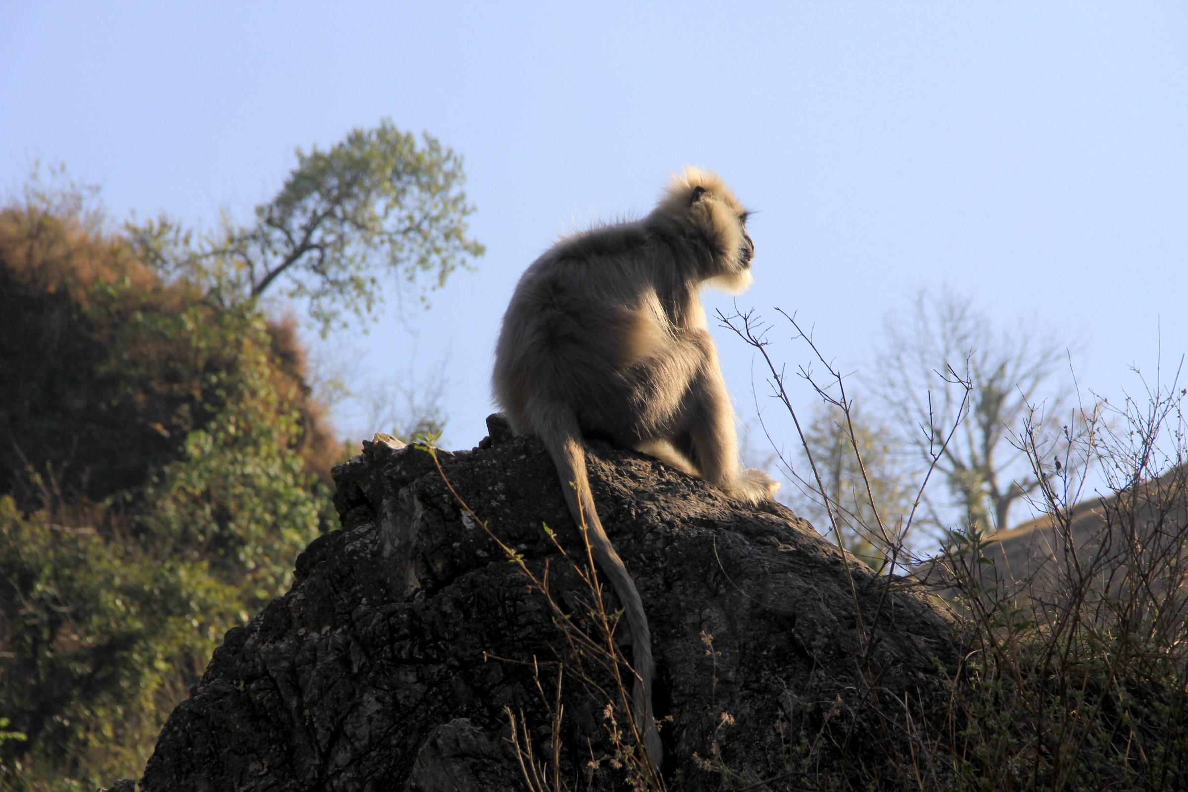 Ape Himalayas