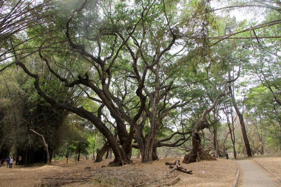 Cubbon Park Bengaluru 5