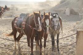 Horses Pyramid