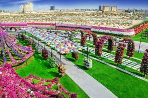dubai miracle garden is one of the best places to visit in dubai