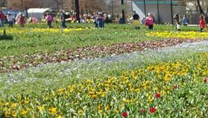 Floriade Canberra Flower Festival