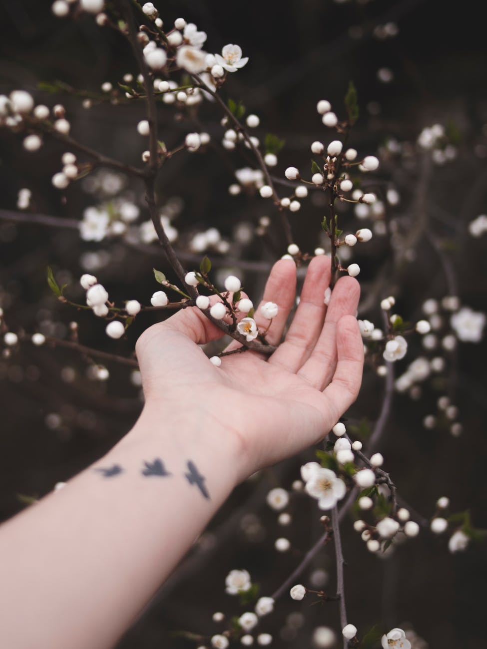 person touching white flowers