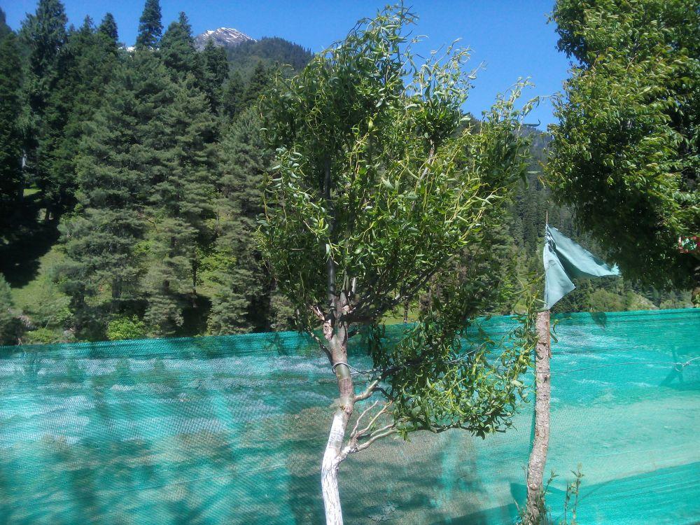 Riverview Guest House, Pahalgam, Kashmir, India