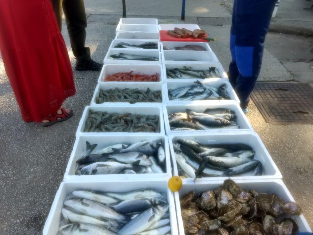 Budva, Montenegro fishseller