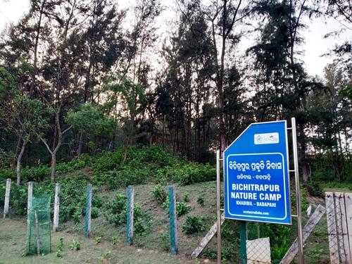 Bichitrapur Mangrove