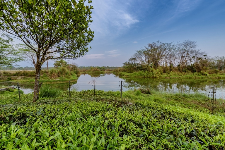 View of Migratory Birds Pond 1
