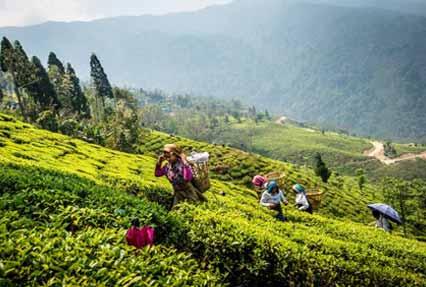 extended-darjeeling-gangtok-tour-7346.jpg