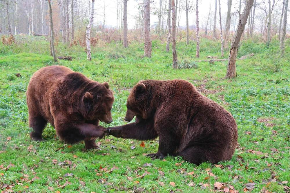 The Best Things to Do in the Black Hills with your Family featured by top US family travel blog, Travel with a Plan: image of bear country