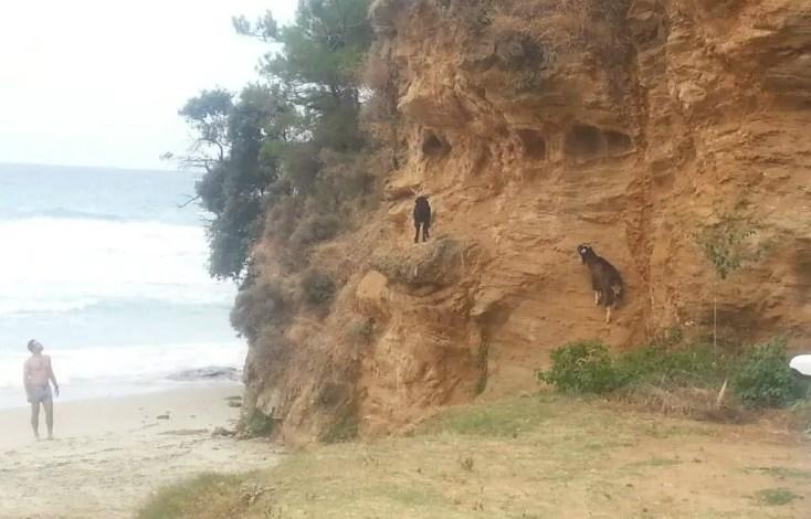 Paradise Beach, Plaje din Thassos