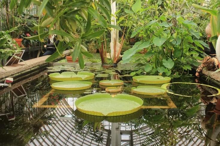 Sera Gradinii Botanice din Gothenburg