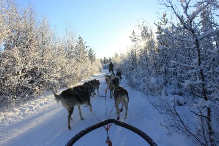 Plimbare cu sania trasa de caini, Laponia Suedeză