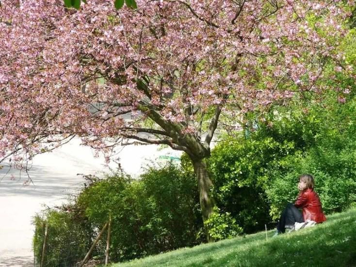 blossom-season-parc-buttes-chaumont-paris