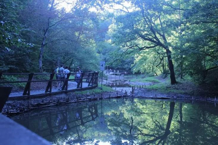 Lacul Rosu din Sovata