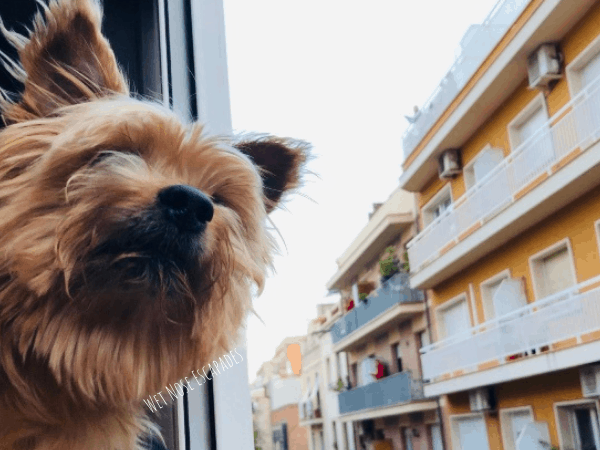 Dog hanging head out of the window while travelling