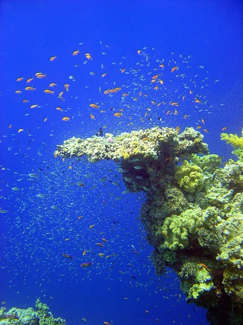 Coral reef, Red Sea, Egypt