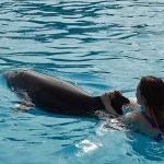 Keeping Dolphins and Whales in Captivity