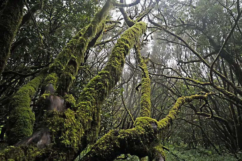 La Gomera, the ancient forests on the island in the clouds
