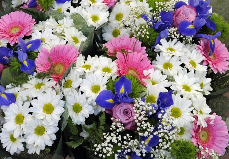 Flowers at Wazemmes market, Lille