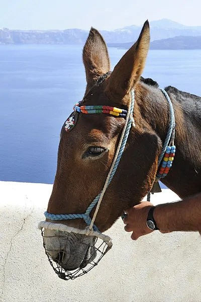 My donkey, Therasia, Santorini, Greece