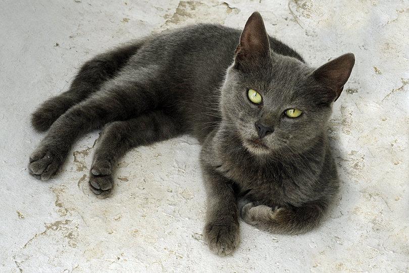 Cats in Santorini, Greece