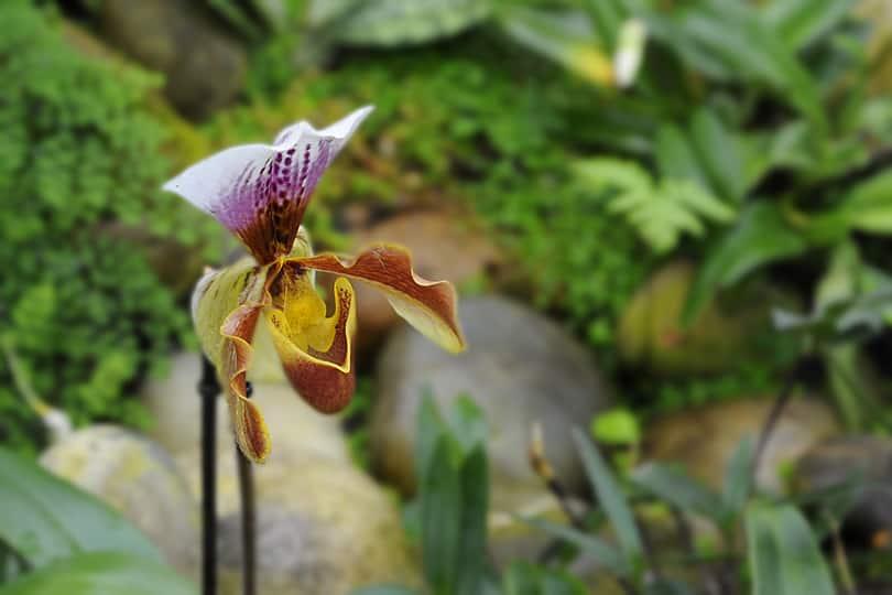 Orchid, Kew Gardens, London
