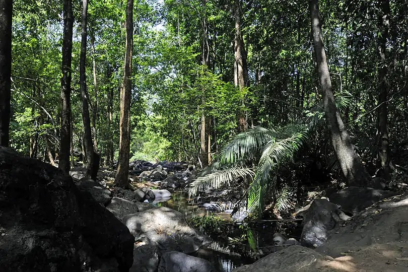 Highlights of Goa, a fabulous walk through the jungle to the Dudhsagar Waterfall