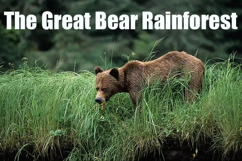 Introducing spring watch in British Columbia and the Great Bear Rainforest