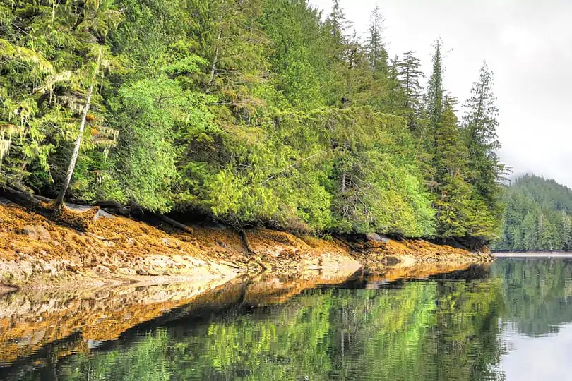 Te Great Bear Rainforest, British Columbia, Canada